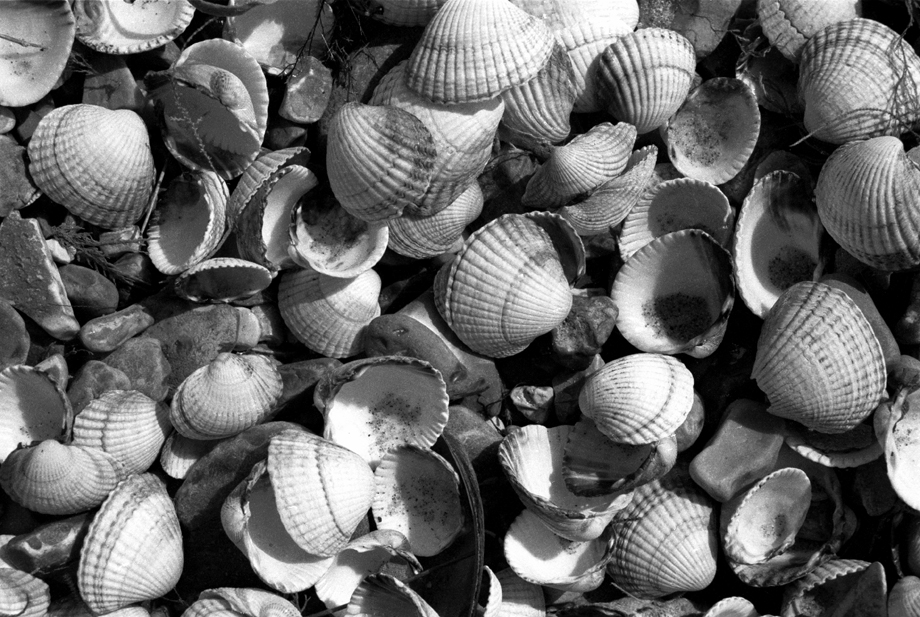 North Sea, UK ~ Shells ~ 1986 ~ CP863007 ~ Richard Clayton Photography ~ Cambridge Photo