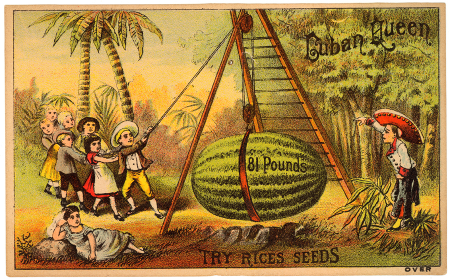 Rice's Seed House ~ Cuban Queen Watermelons