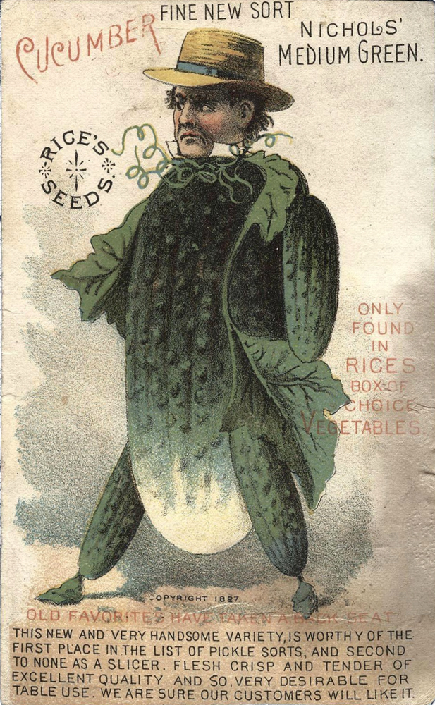 Rice's Seeds ~ Nicholas Medium Green Cucumber ~ 1887