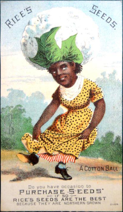 Rices Seed Company ~ Cotton Ball Head 1880's